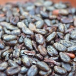 Firefly Cacao Beans